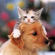 猫をかぶる。