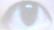 たしかな目