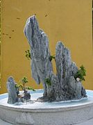 ホンノンボ「ベトナム盆栽」