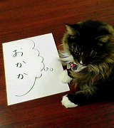 猫と会話する会