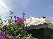 沖縄移住コミュニティ