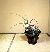 MOA光輪花クラブ
