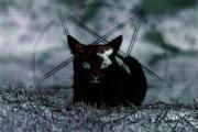 猫がキャっと驚く
