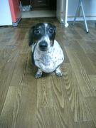 ダックス…集まれ変な犬特集…!