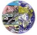 生物多様性条約COP10