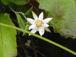 花の浮島礼文島