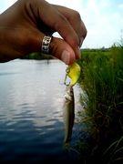 『陸の上釣査隊』