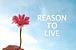 *REASON TO LIVE*