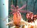 国産海水魚