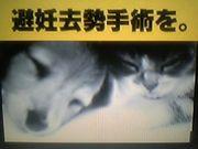 犬猫【避妊去勢手術】を。