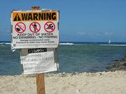 NO SURFING NO LIFE
