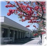 東京都立鷺宮高校