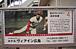 広島東洋カープ(中傷禁止)