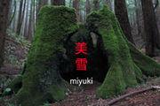 Miyuki - 美雪