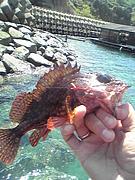 熊本根魚釣りを語れ〜〜!!