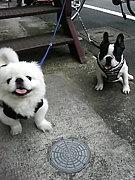 中国犬が大好きな人