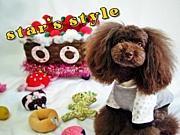 犬洋服HARZth&YKM+
