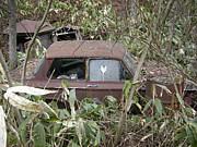 秋田の地に眠る車達。