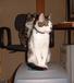 猫リセット被害者の会