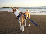 海を歩く犬