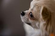犬との対話・ドッグリーディング