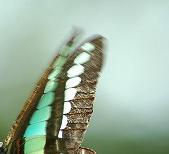 虫の翅持つ者
