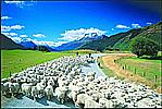 ニュージーランド大好き!