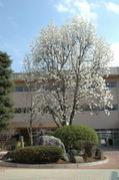 千葉県流山市立北部中学校