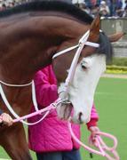 白い顔のお馬好き同盟