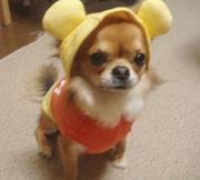 モデル犬になりたい!
