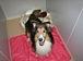 老犬の泊まれる動物宿屋の目安箱