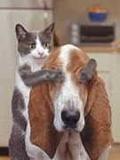 猫&犬ラブリィ♪