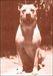 Dogo Argentino〜hunting type〜