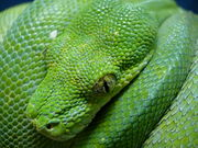 Boa & Python