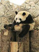 動物写真集(≧з≦)…パンダ♪