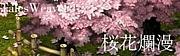 。o○桜花爛漫○o。