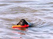 犬と海と川遊び♪