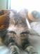 『ねこみっけ』〜写真と猫話