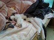 仔猫の福多朗