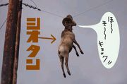 塩タン山羊放送局・専用コミュ
