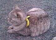 神戸大学に続く坂道の猫