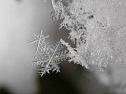 自然とスノーボードin九州