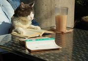 本を読んだから、感想を書こう