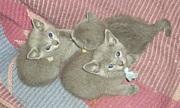 猫の里親、見合い相手募集