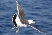 北海道Birder