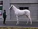 白馬のマシュマロ