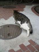 マンホール(manhole)