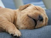 仕事中は眠いんです。