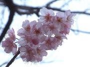 花見ノッサ☆