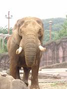 多摩動物園(多摩動物公園)